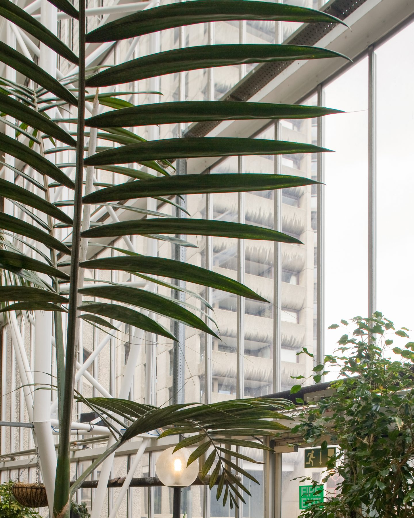 IGNANT-Travel-Luke-Hayes-The-Barbican-Conservatory-012
