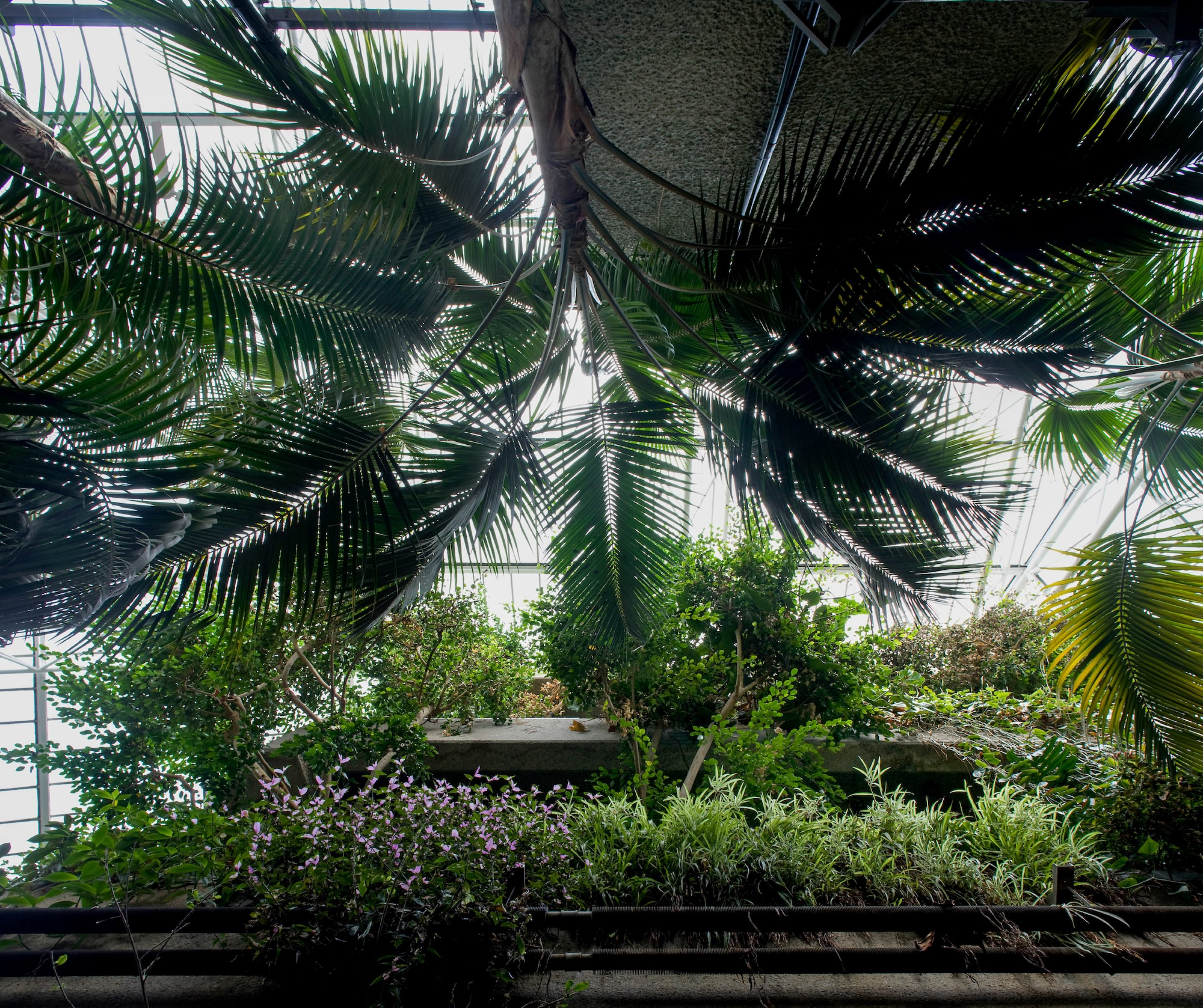 IGNANT-Travel-Luke-Hayes-The-Barbican-Conservatory-08