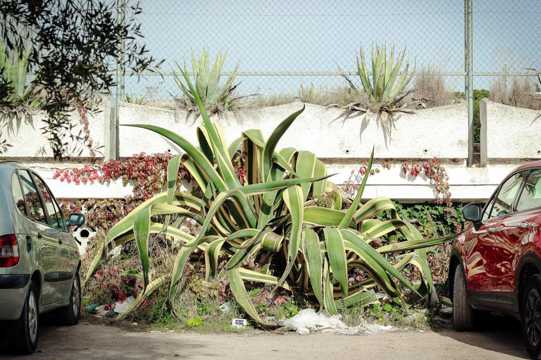 IGNANT-Photography-Graeme-Haunholter-014