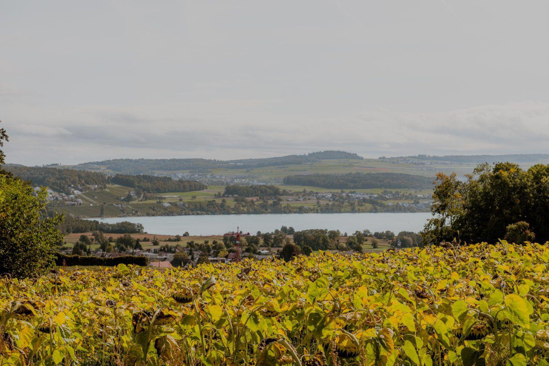 IGNANT-zurich-swizerland-Gamper-Franz-Gruenewald-4