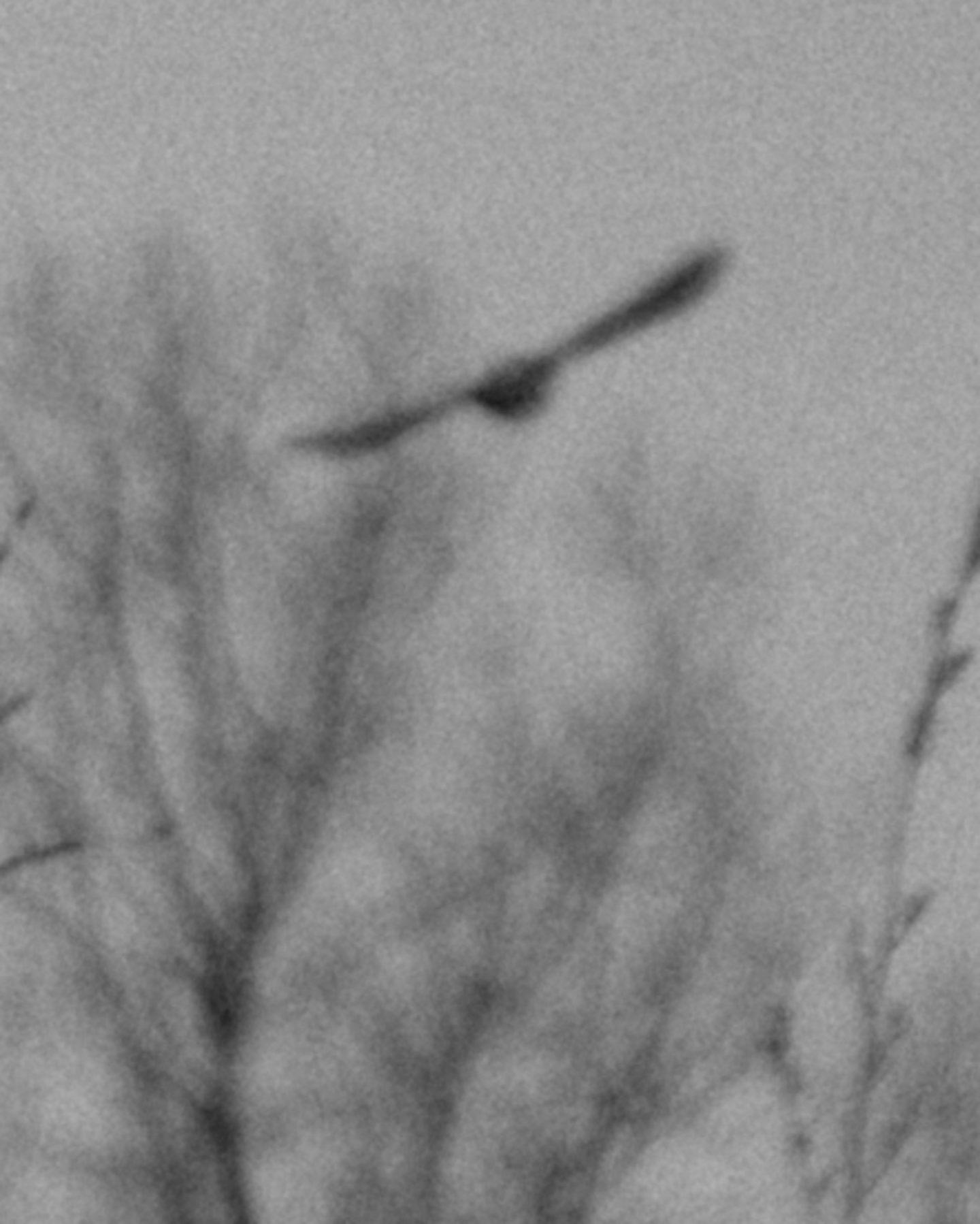 IGNANT-Photography-Ian-Bates-Meadowlark-04