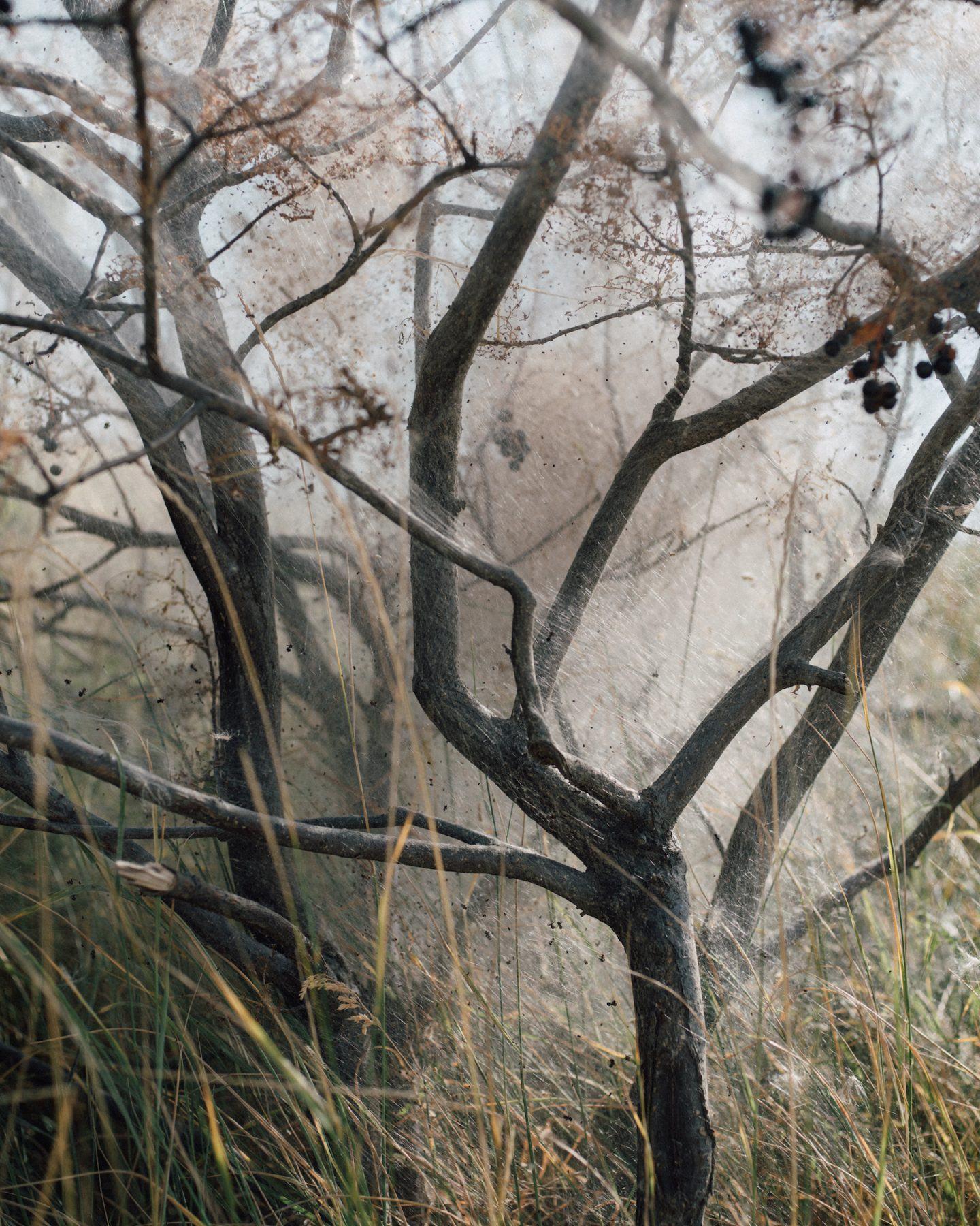 IGNANT-Photography-Ian-Bates-Meadowlark-18