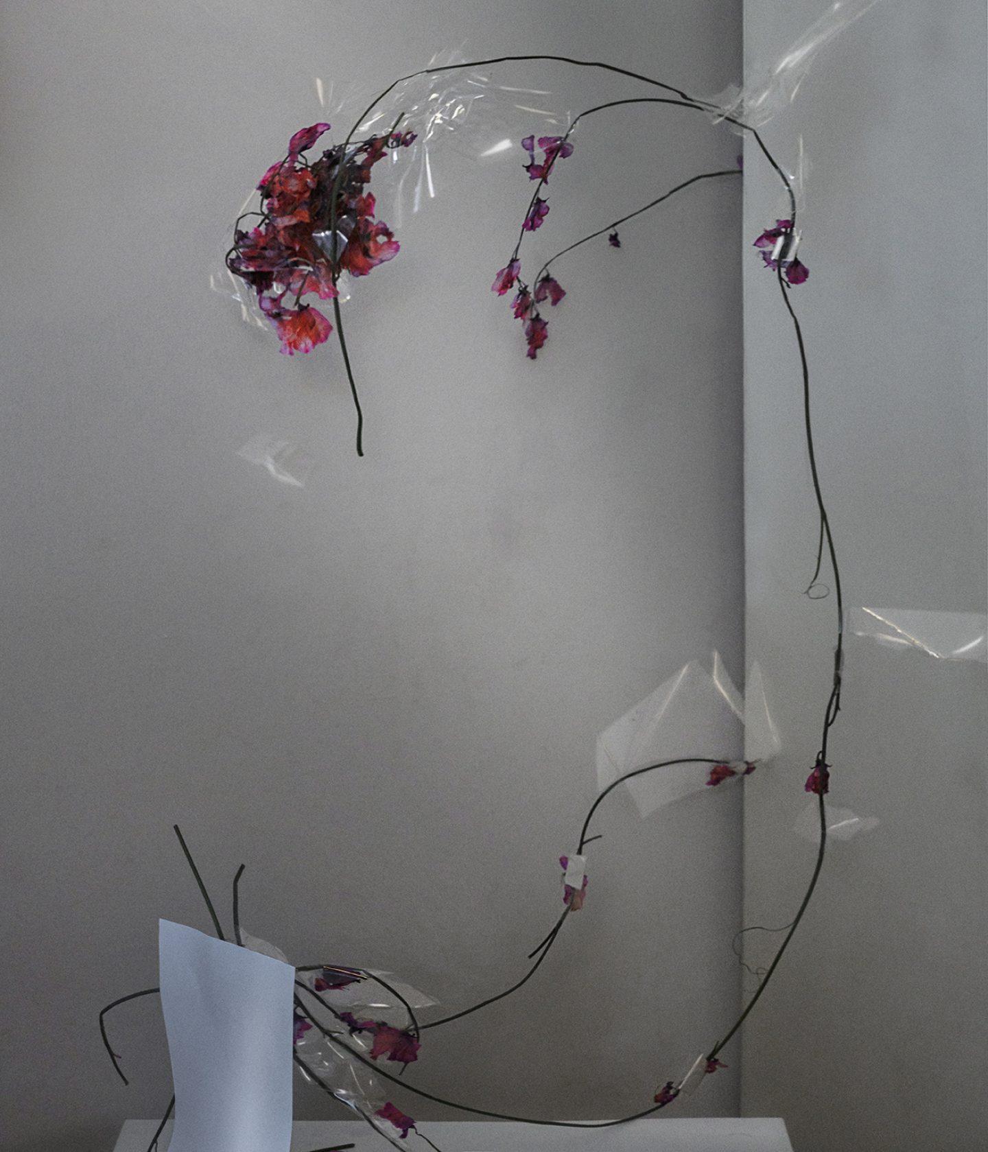 IGNANT-Photograpy-Donimik-Tarabanski-Roses-New-06