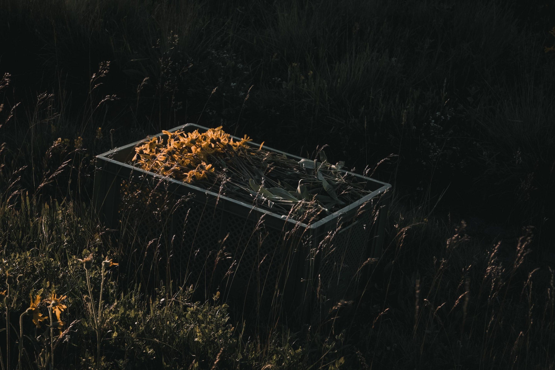 IGNANT-Dr-Hauschka-Wild-Plant-Harvest-Clemens-Poloczek-019