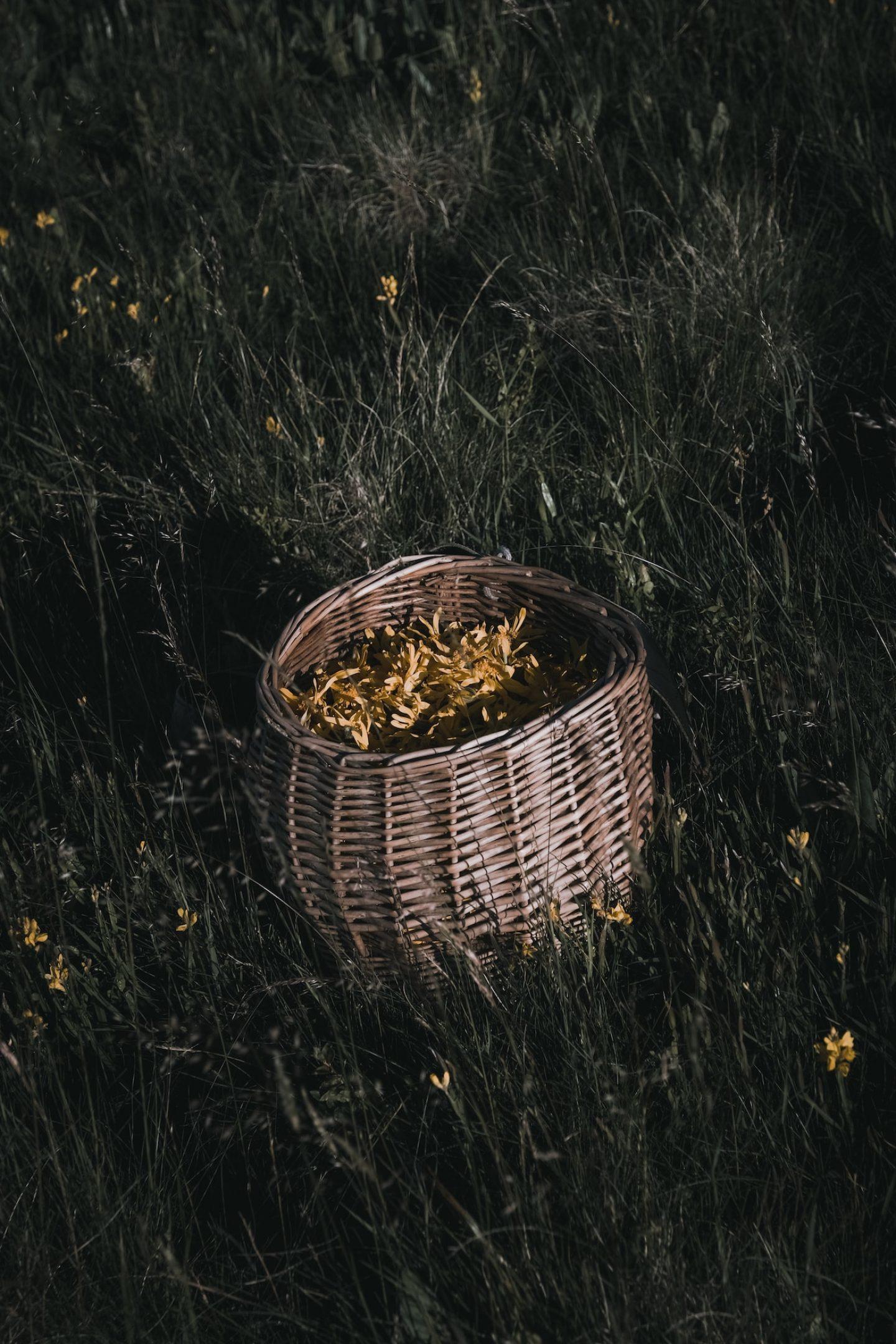 IGNANT-Dr-Hauschka-Wild-Plant-Harvest-Clemens-Poloczek-028