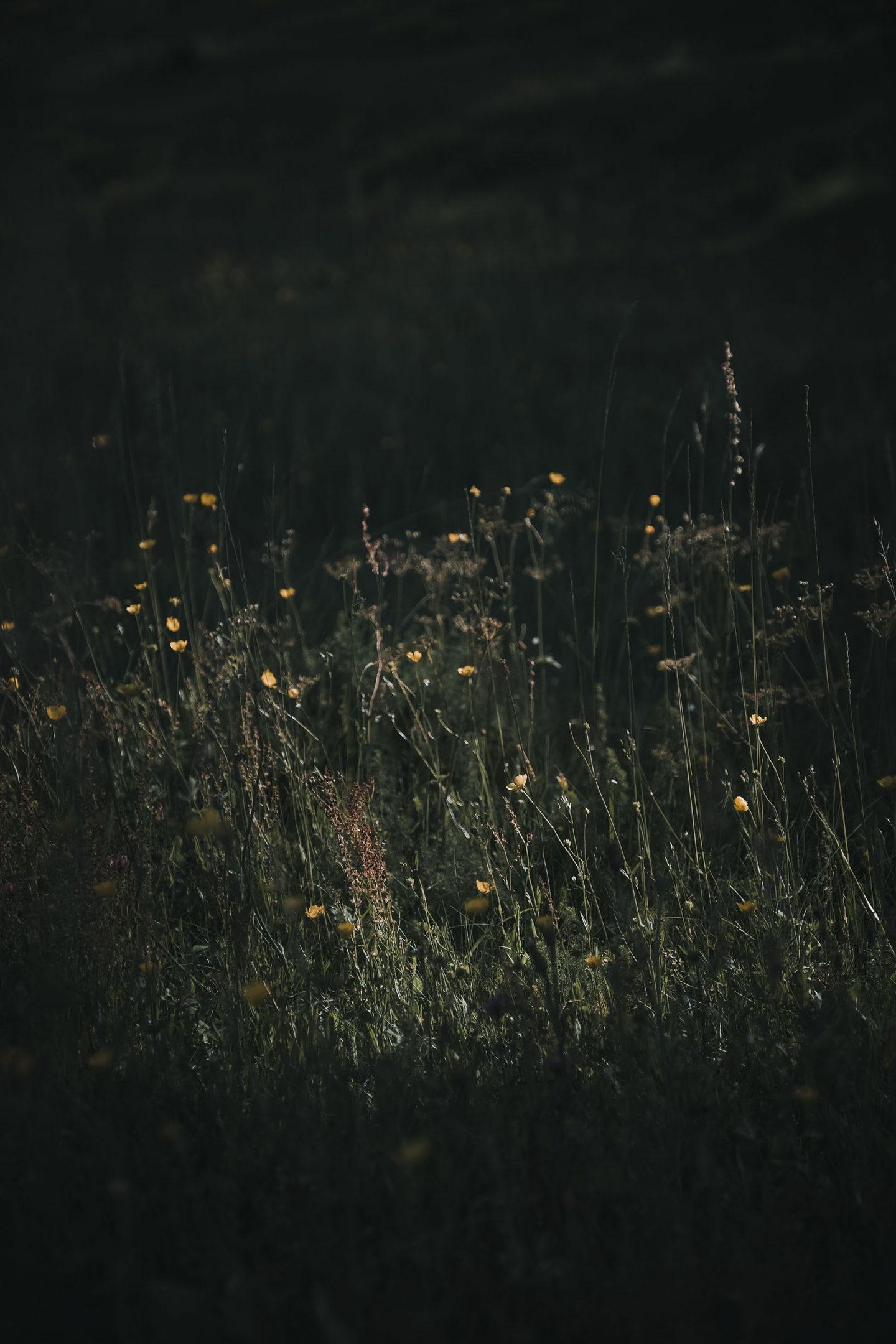 IGNANT-Dr-Hauschka-Wildblumenernte-14
