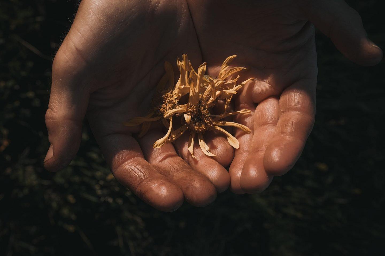 IGNANT-Dr-Hauschka-Wildblumenernte-8