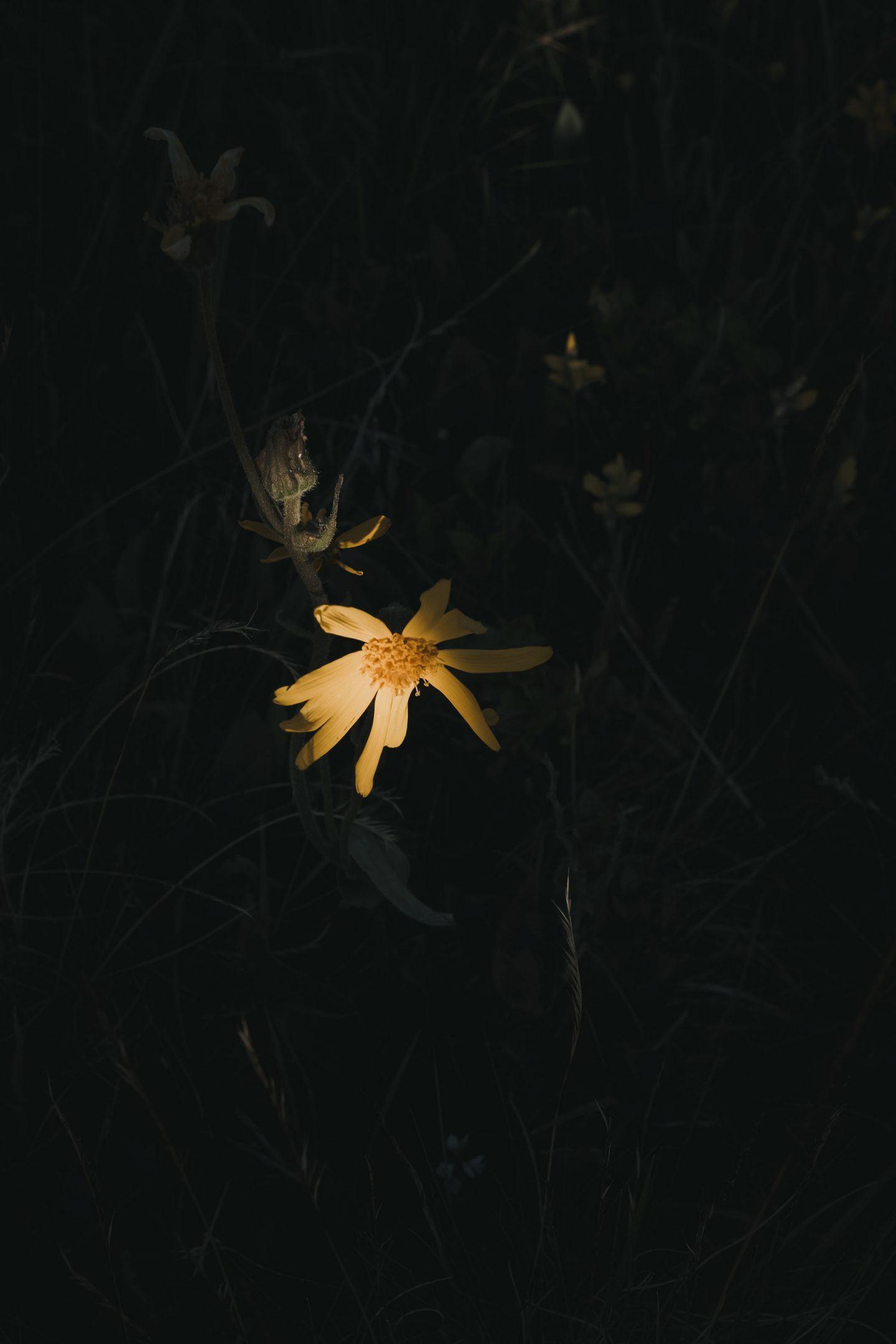 IGNANT-Dr-Hauschka-Wildblumenernte-9