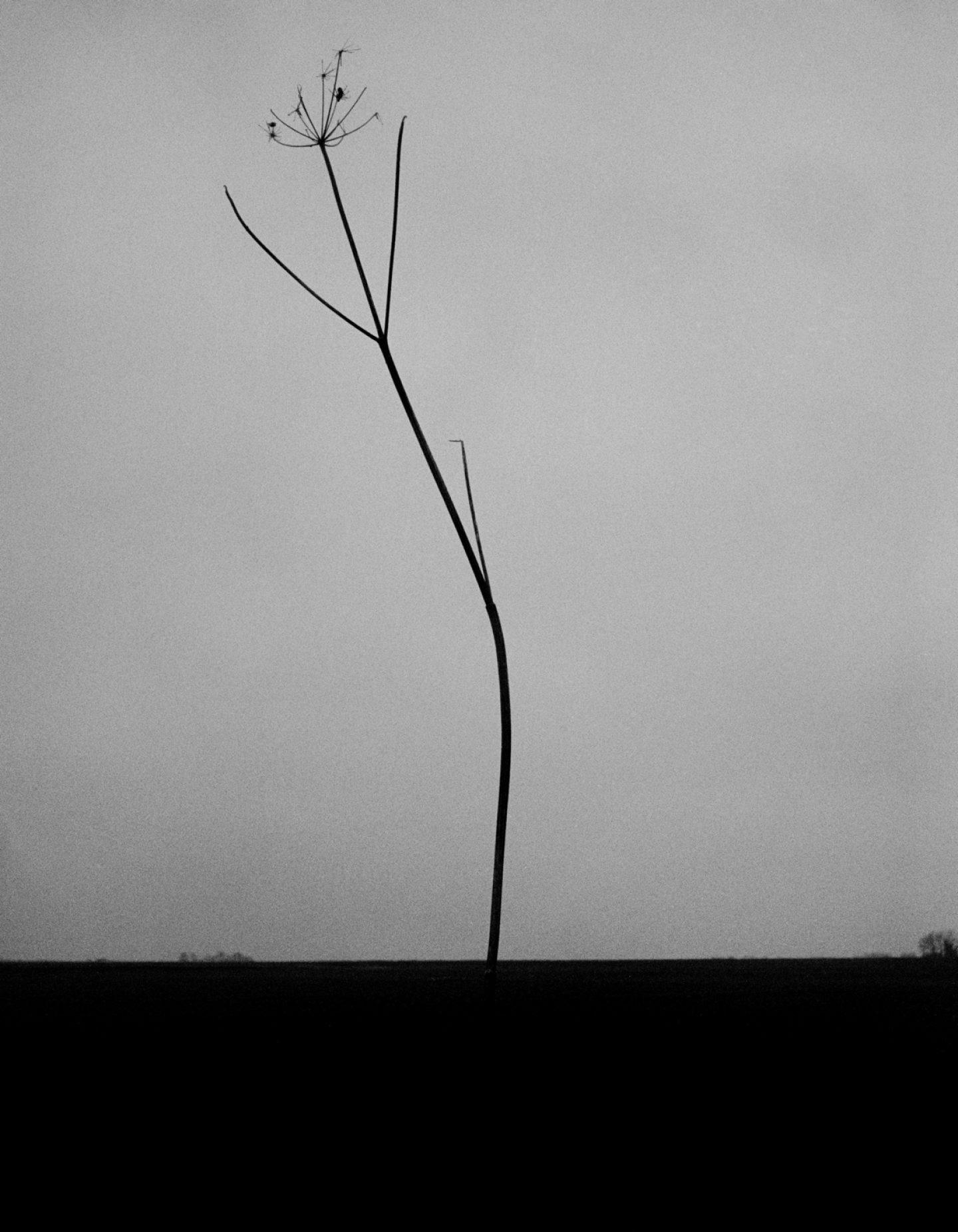 IGNANT-Photography-Jack-Davison-New-012