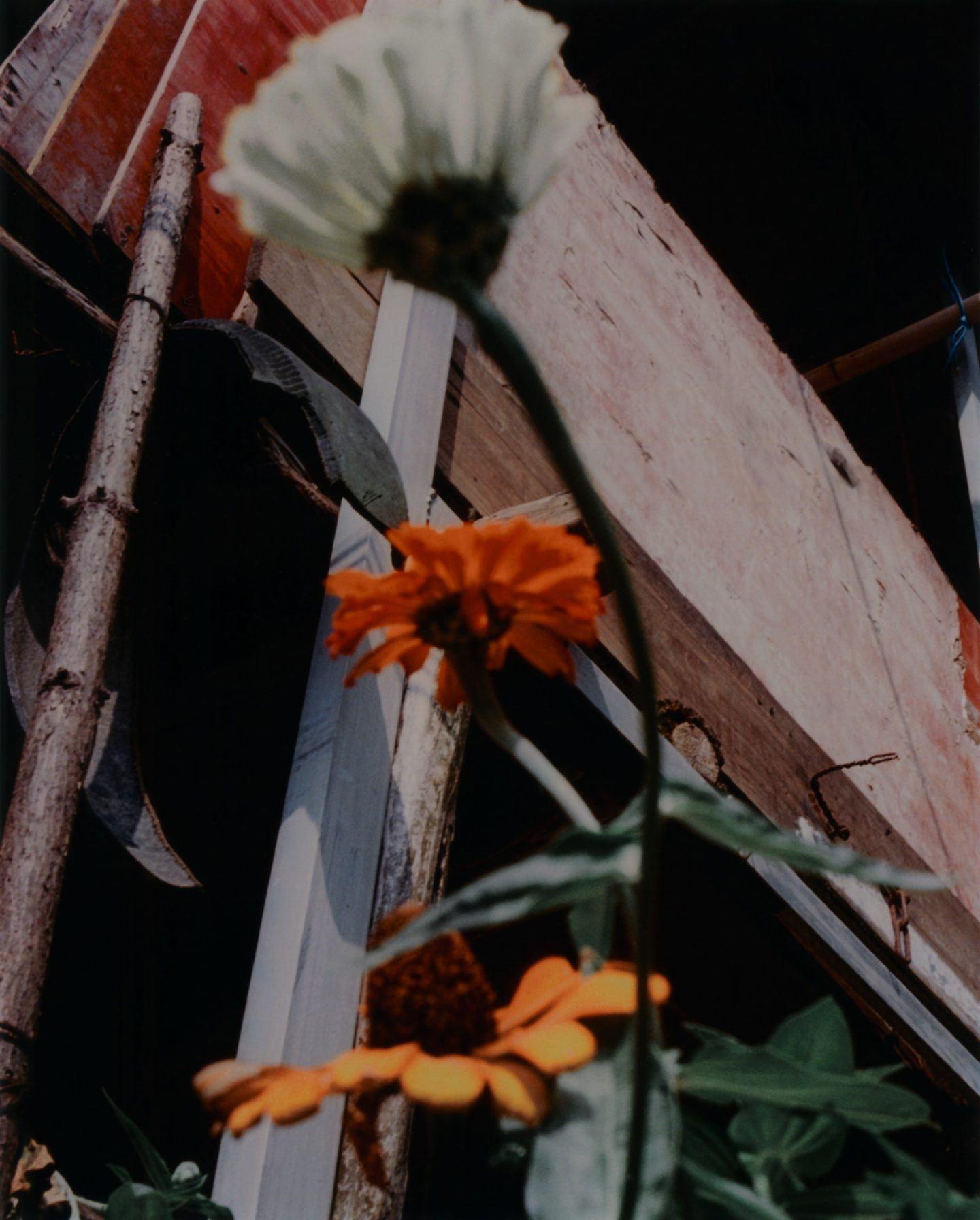 IGNANT-Photography-Jack-Davison-Recent-014