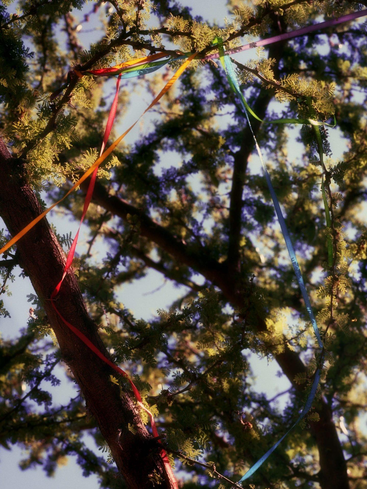 IGNANT-Photography-Jacques-Brun-Sunset-Garden-012