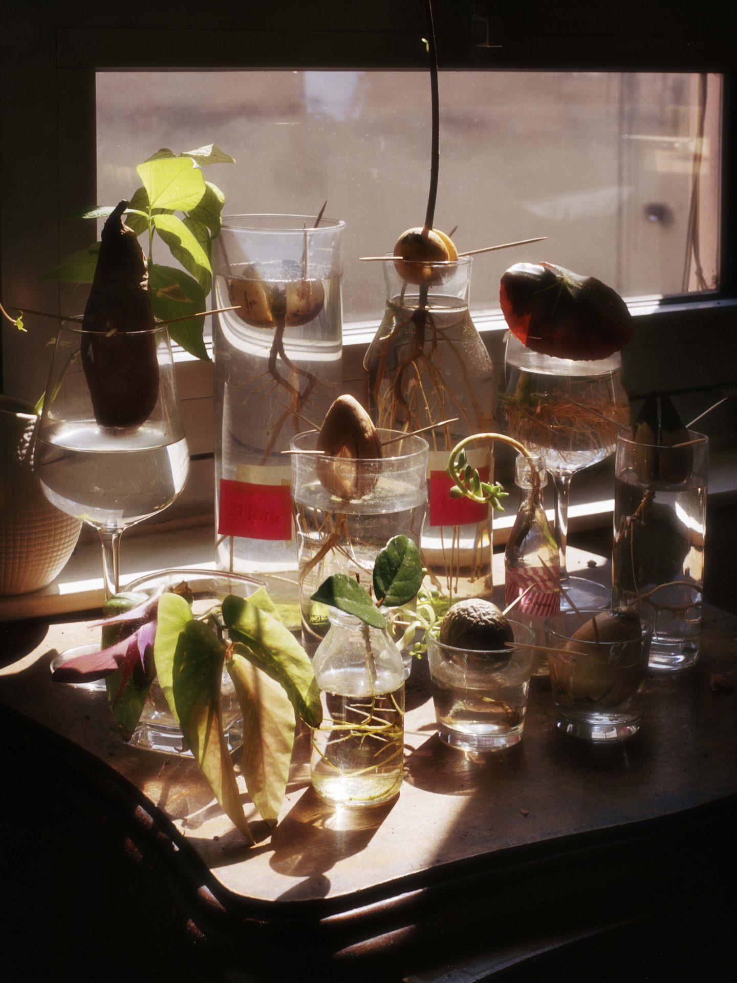 IGNANT-Photography-Jacques-Brun-Sunset-Garden-017