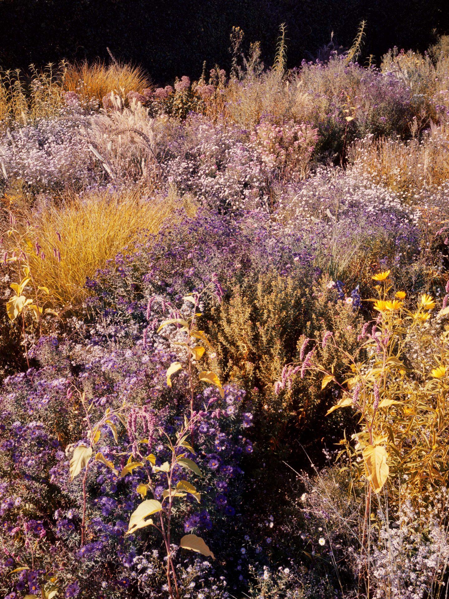 IGNANT-Photography-Jacques-Brun-Sunset-Garden-019