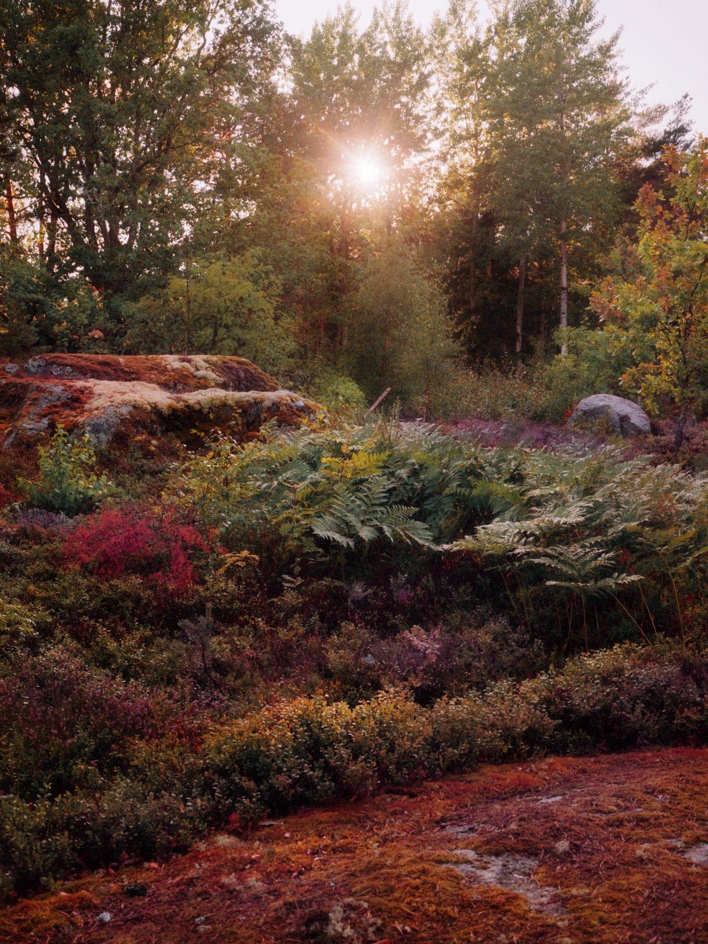 IGNANT-Photography-Jacques-Brun-Sunset-Garden-04
