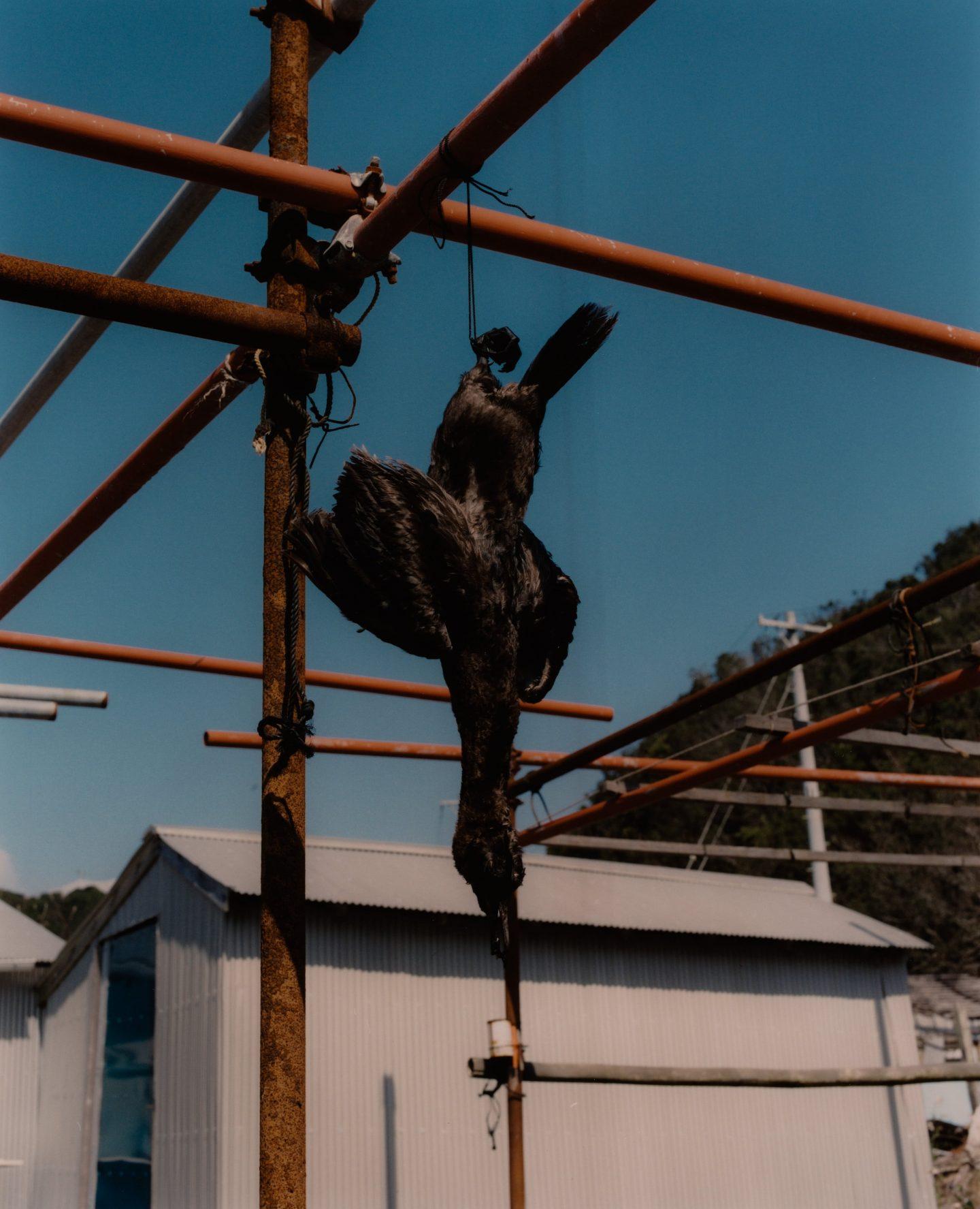 IGNANT-Photography-Stefan-Dotter-Sea-Women-Japan-06