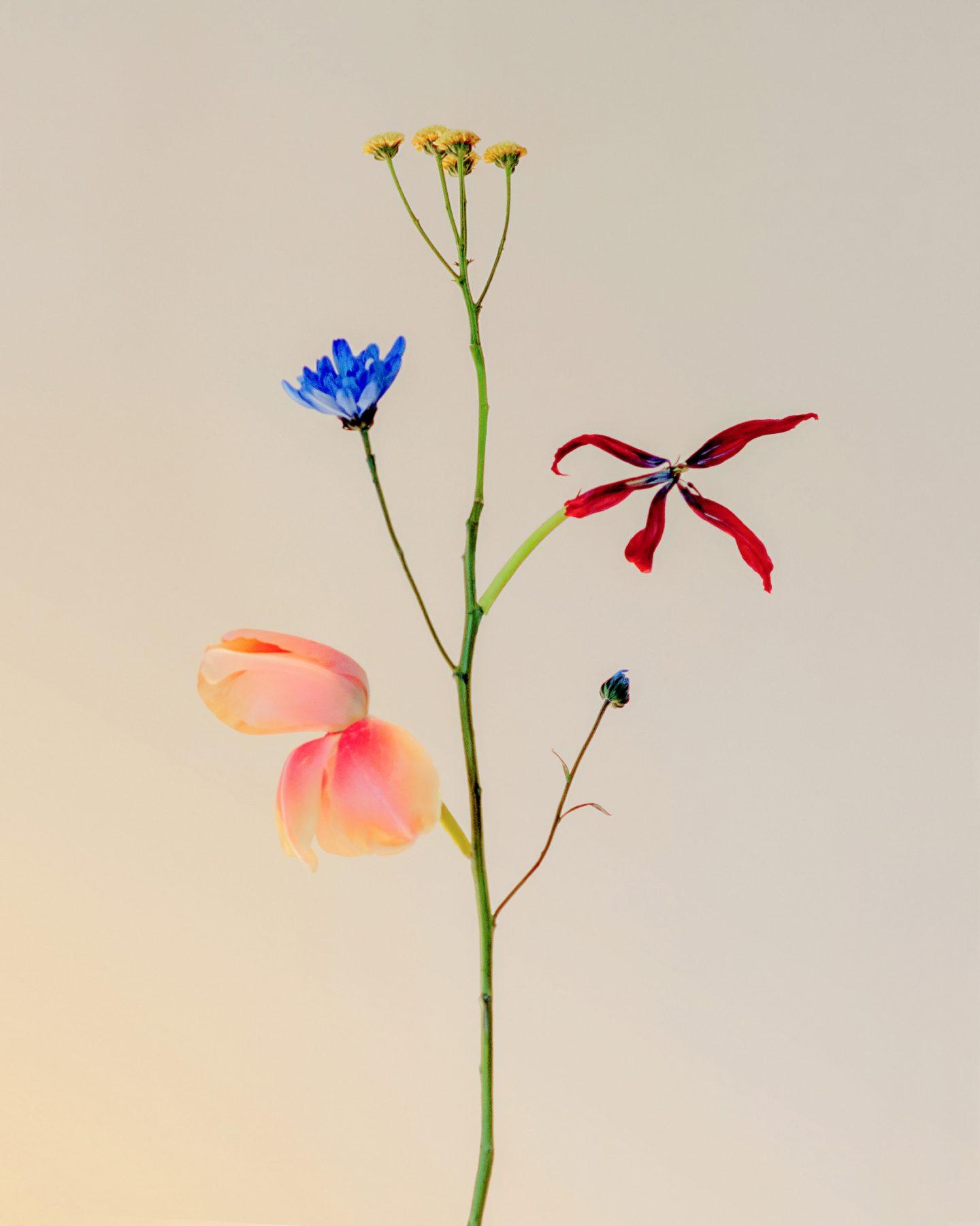 IGNANT-Photography-Jennifer-Latour-03