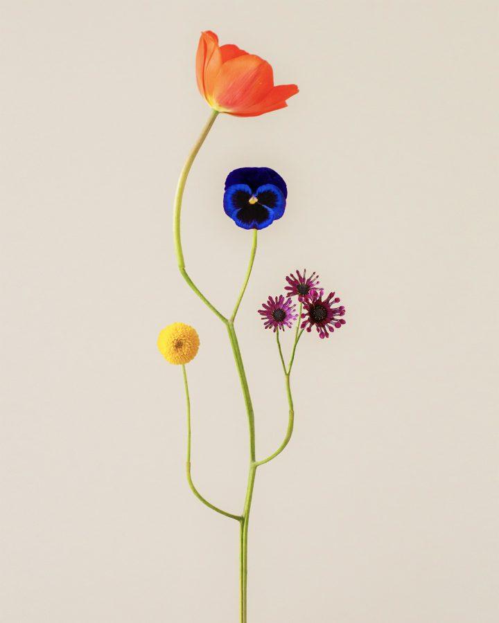 The Beautiful Simplicity Of Photographer Jennifer Latour's Bound Species