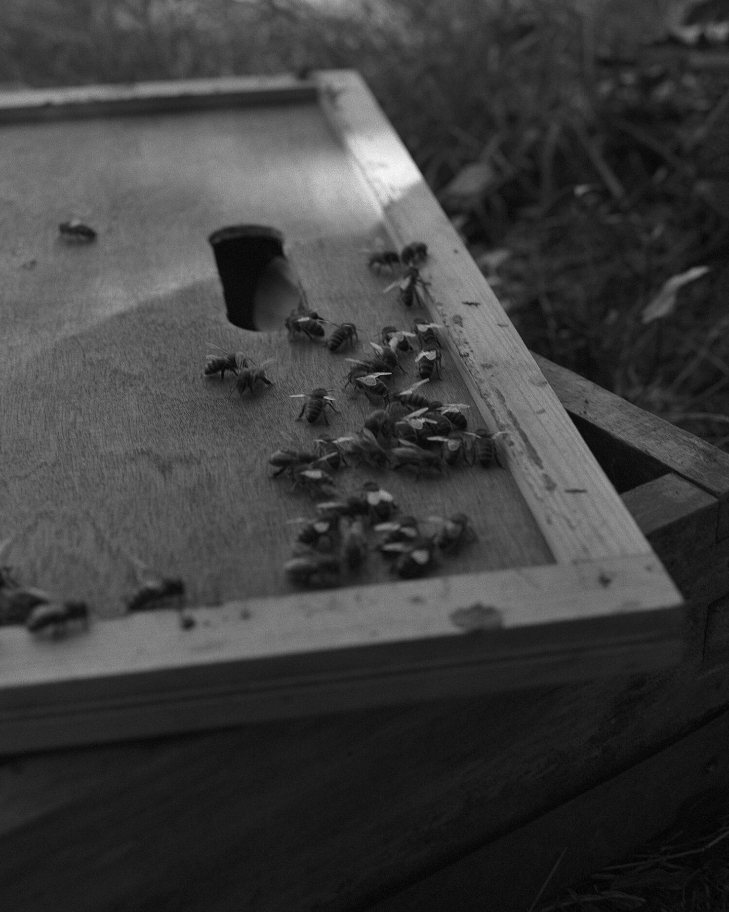 IGNANT-Photography-Sadie-Catt-Beekeeper-022
